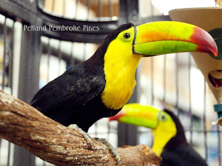 Birds Birds, Pet birds, Birds for sale