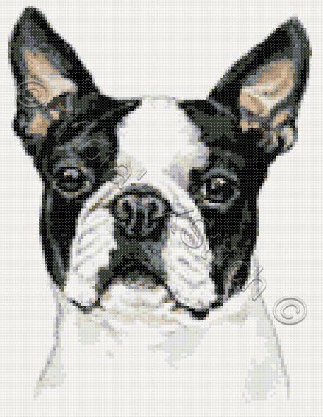 Boston Terrier dog cross stitch kit, pattern   Yiotas XStitch
