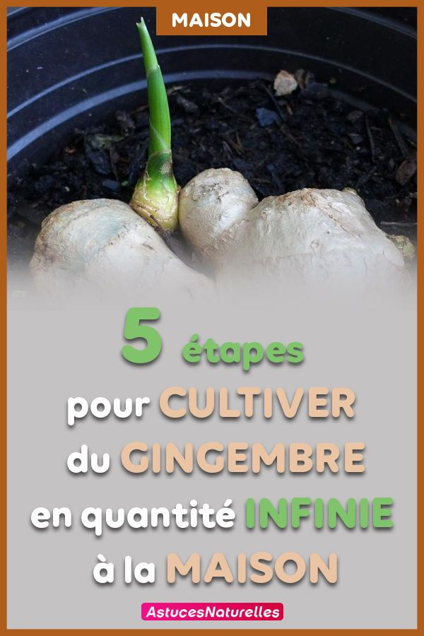 Plus besoin d'acheter du gingembre : Découvrez les five étapes simples pour le cultiver en quantité infinie à los angeles maison !