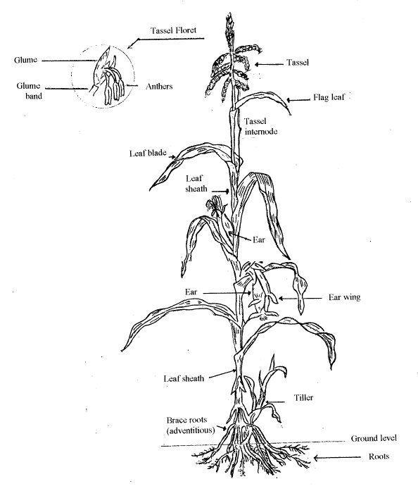 358 best Botany on the Web images on Pinterest | Botany, A