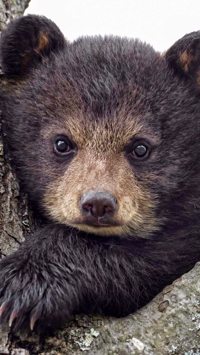 car sez: Mult-EYE-Tasking Bear Cub.  Right eye tracking mom who is coming to kill you and my left is watching you, so I don't miss the fun.