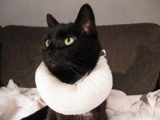 Gör egen krage eller tröja till katten kattstatus.se