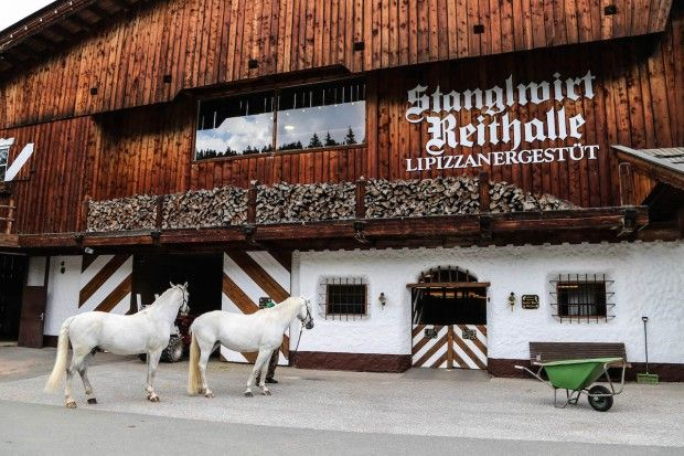 Lipizzanergestüt Stanglwirt in Going am Wilden Kaiser