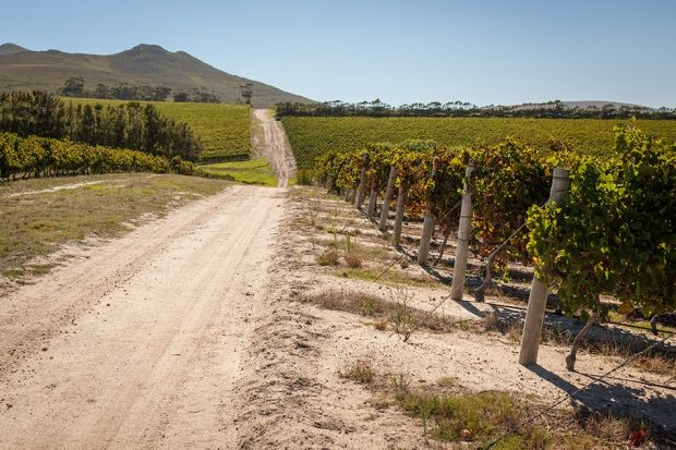 10 Things You Didn't Know About the Grootbos Experience | Grootbos #wine #winetasting http://www.grootbos.com/en/blog/travel/10-things-you-didnt-know-about-the-grootbos-experience