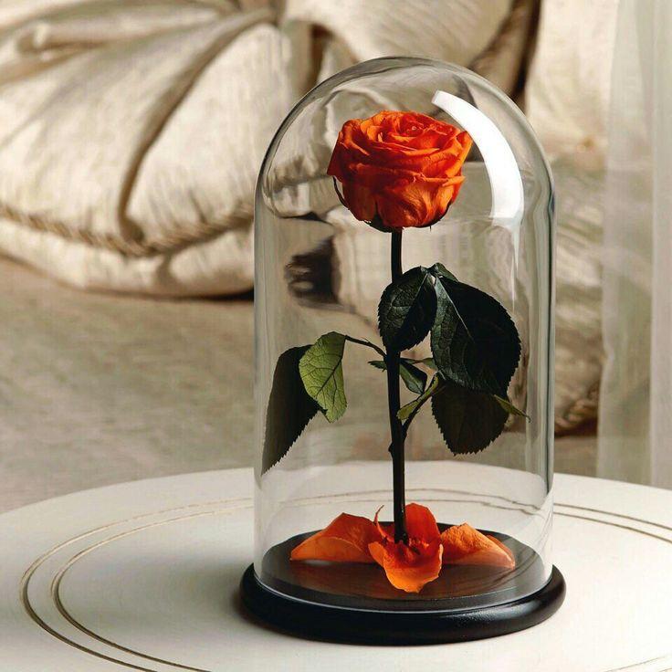 Картинки роза в банке