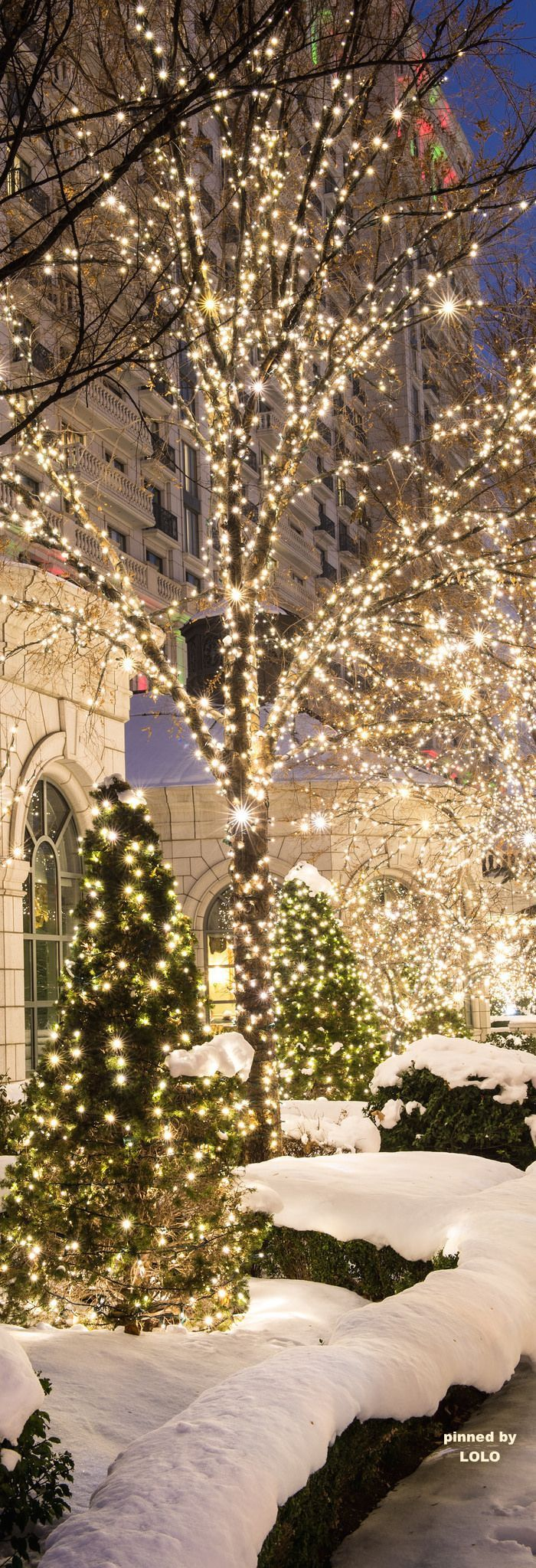 The Millionairess Of Pennsylvania: Christmas Lites via Flickr