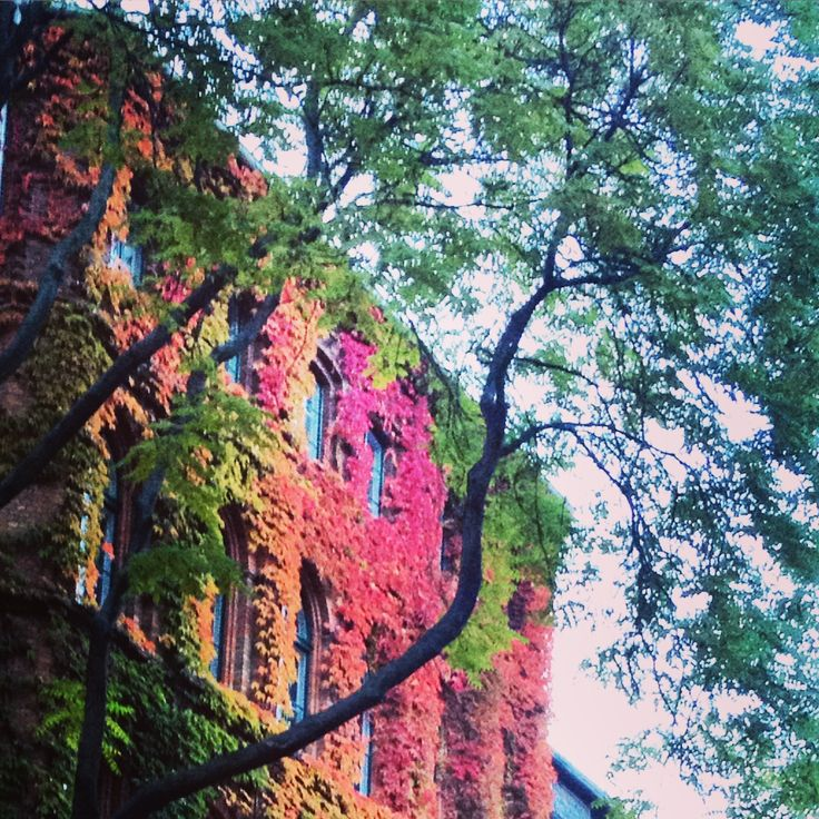 #berlin #mitte #berlinmitte #autumn #autumnleaves #red #green