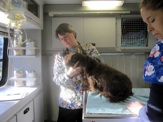 Careful Skin Checks - Careful skin checks and other meticulous work can be performed by your local #veterinarian with ease. Know who can put your animal at ease during routine medical procedures.