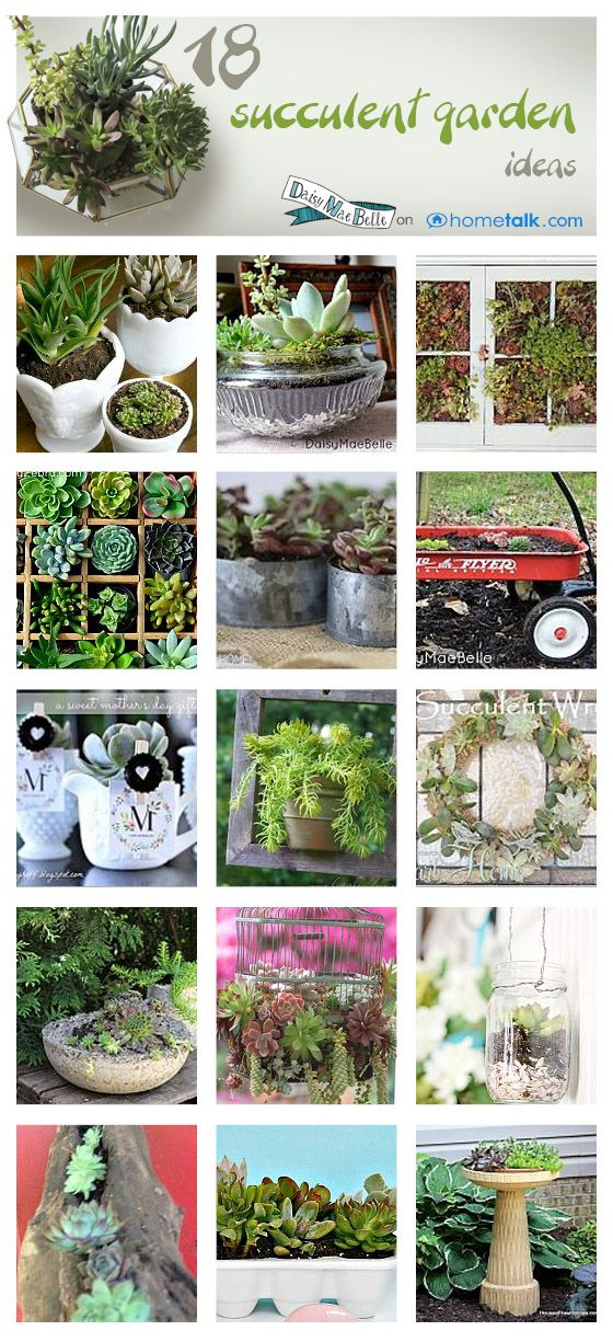 """18 Succulent Garden Ideas! will these grow in Blue River, CO? Only if they are Hardy in your zone. Sempervivem """"hens & chicks""""are and will do well there."""