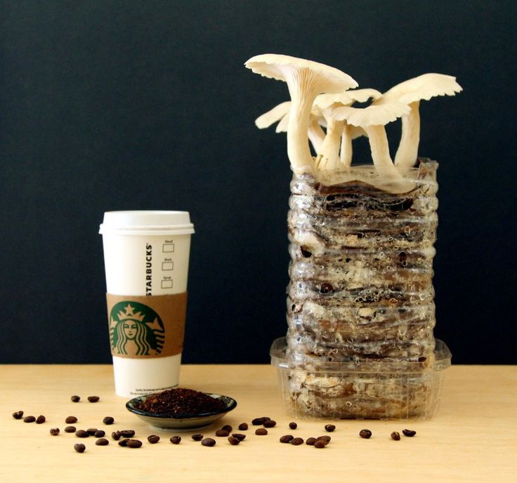 HOW TO: Grow your own mushrooms from recycled cardboard and coffee grounds | Inhabitat - Sustainable Design Innovation, Eco Architecture, Green Building