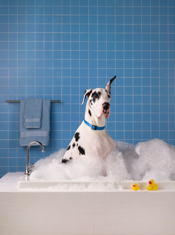 10 best self serve dog wash images on pinterest dog wash dog proper canine home hair care can be a bit challenging brushing up on your dog grooming iq will help pet lovers to groom their dog like a pr solutioingenieria Choice Image