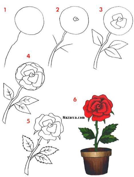 Saksida Acmis Gul Resmi Cizme çiçek çizimi Art Drawings Pencil