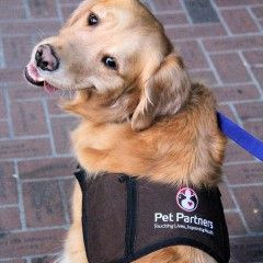 Vote for Parker for the 2014 American Humane Association Hero Dog Awards (Therapy Category)