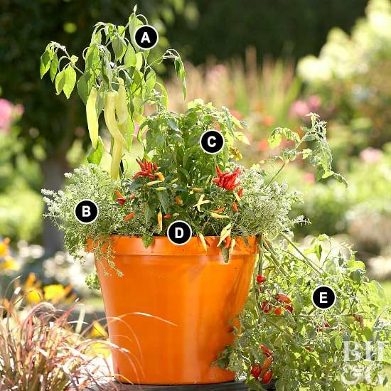 If you have limited space, a miniature vegetable garden is easy to grow—and pretty, too—if you plant in a pot. This pot can be moved inside and provide fresh herbs and vegetables year-round. Use our plant combination suggestions or create your own.