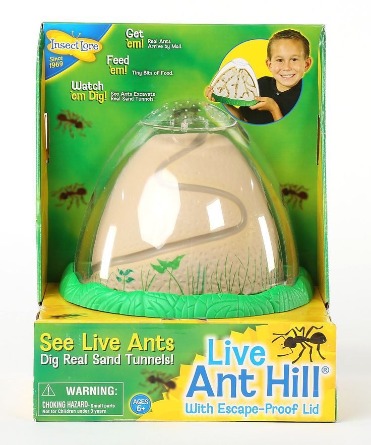 Look at this Ant Hill & Life Cycle Stage Figurine Set on #zulily today!