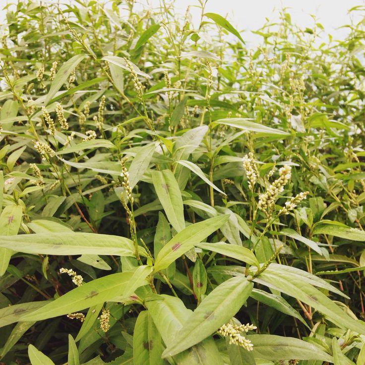 Nuestros cultivos...
