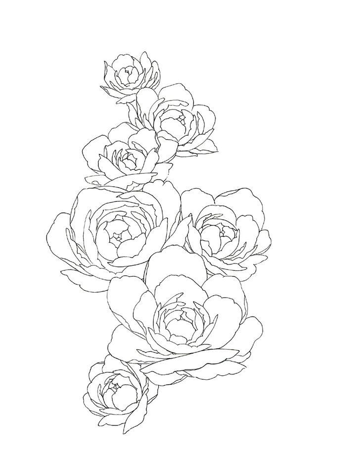 薔薇 素材 -