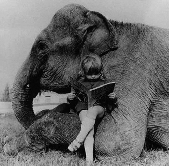 Everyone needs an elephant to sit on...Little Girls, Girls Reading, Friends, Elephant, Reading Spot, Book, Reading Chairs, Reading Nooks, Stories Time
