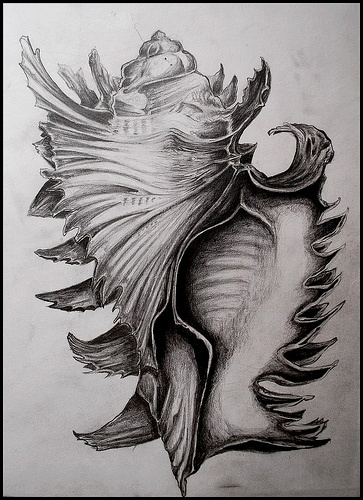 Shell drawing by John Brinegar