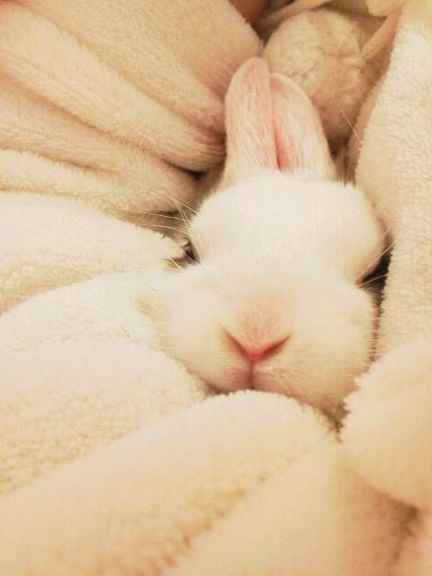 BunnyFluffy Bunnies, Rabbit Hole, Animal Baby, Baby Bunnies, Easter Bunnies, Baby Animal, Blankets, Snuggles Bunnies, White Rabbit