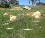 Cheap homemade solar powered electric fence for sheep