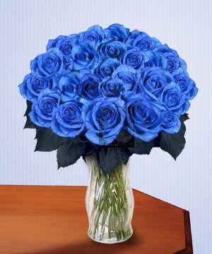 Blue Roses Flowers