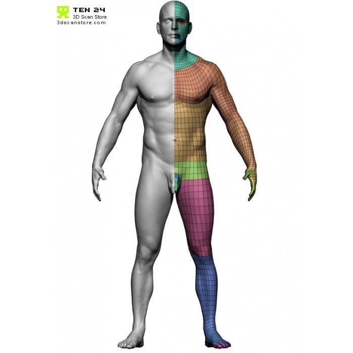 78 besten anatomy Bilder auf Pinterest | Menschliche anatomie ...