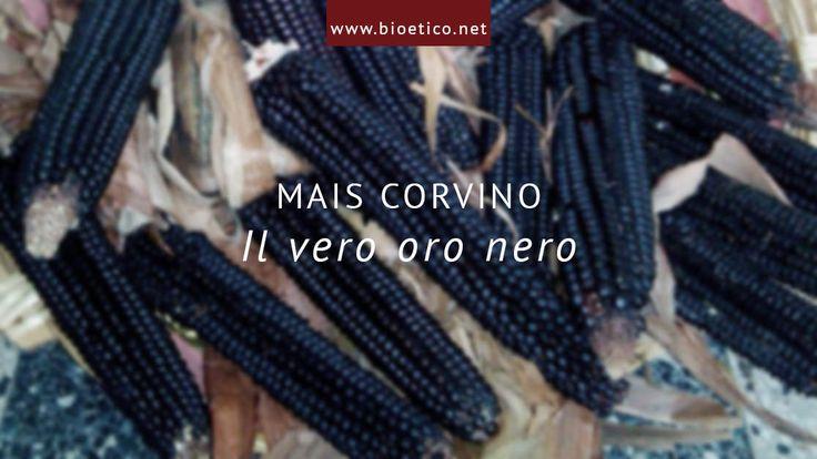 """#Bioeticonet intervista il """"re"""" del #mais corvino che ci confida: """"I social network sempre più importanti per lasostenibilità delle imprese agricole italiane!"""""""