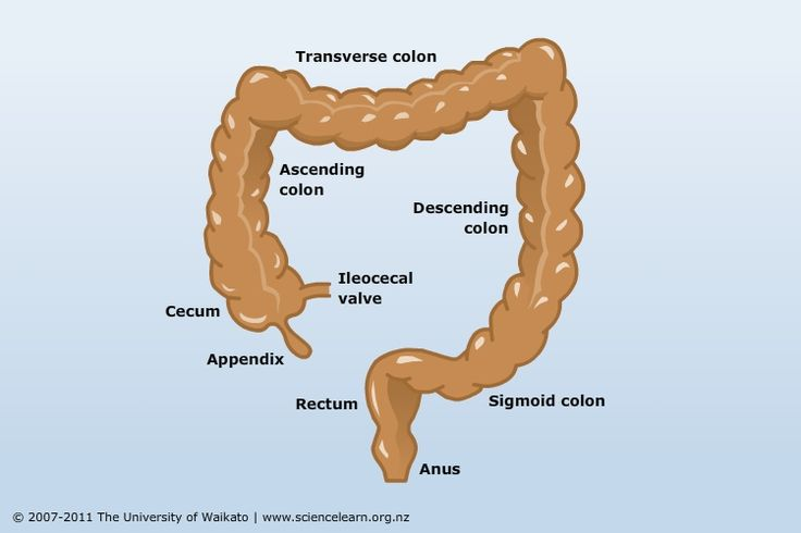 Large intestine function - TEACHING RESOURCE. Recent research has revealed that the large intestine and its resident bacterial population have key roles to play in determining our health and wellbeing. It is much more than just a waste storage facility.