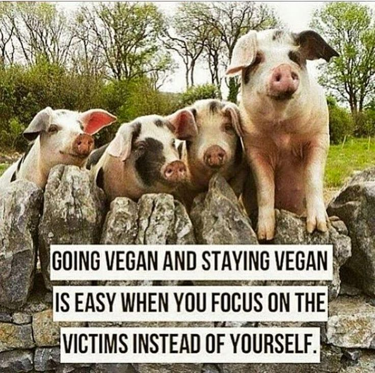 Going vegan was the obvious choice when it was no longer about my convenience or taste buds. It's about another being's life.