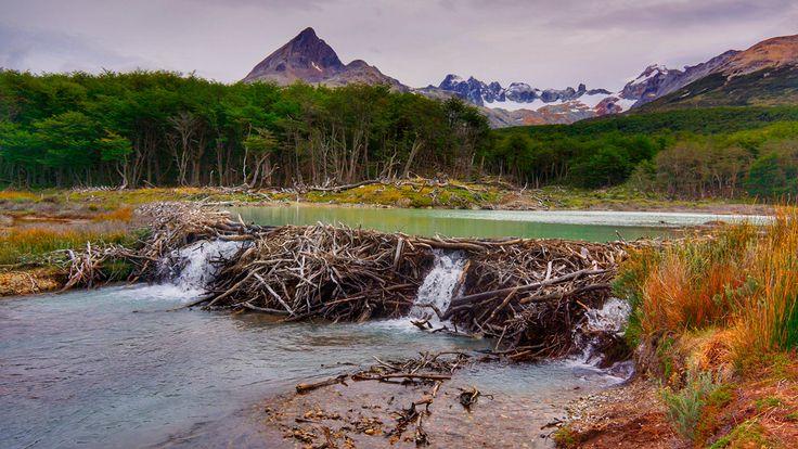 Патагония это край дикой природы на самом юге Южной Америке, область Аргентины и Чили. Она холодная, неприступная, твёрдая как гранитные скалы, но её душа широка как пампасы.