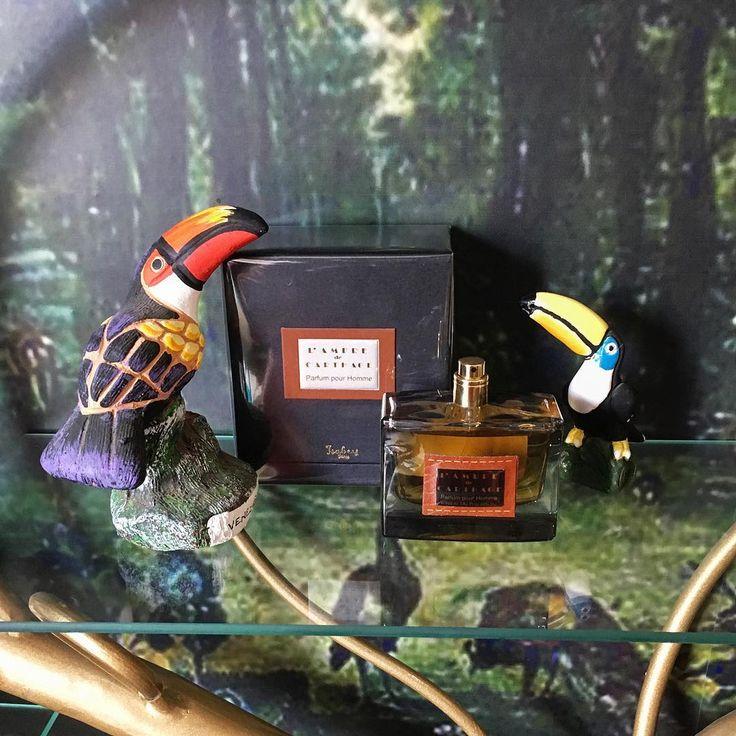 #lambredecarthage #panouge #toucan #venezuela #rosinaperfumery #giannitsopoulou6 #glyfada #athens #greece
