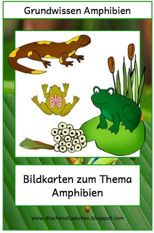 Drachenstübchen: Flashcards Amphibien Frösche lifecycle