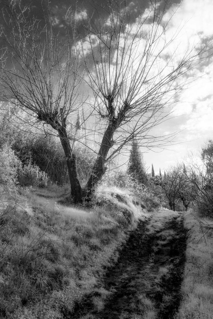Barren Tree (early spring infrared)