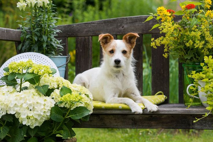 How to build the perfect backyard for dogs Learn which plants are hardy, which are poisonous, and how to create a beautiful but functional layout.