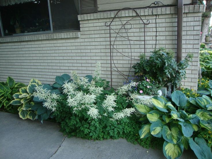 214 best Made For The Shade images on Pinterest Shade plants