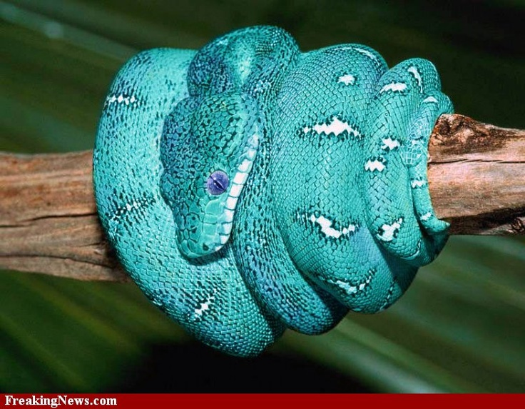 colorful snakes   Color Anomaly Pictures - Strange Pics - Freaking News