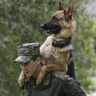 So your back legs were injured in Afghanistan?  Oh yeah, Dude, I received a medal and everything.  You don't mind carrying me, do you?