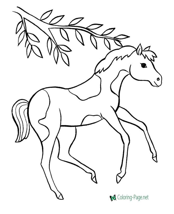 Horse Coloring Pages Horse Coloring Pages Horse Coloring Horse