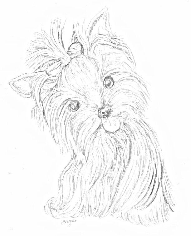 19 Best Coloring Images On Pinterest Pets Yorkie And Yorkies Yorkie Coloring Pages