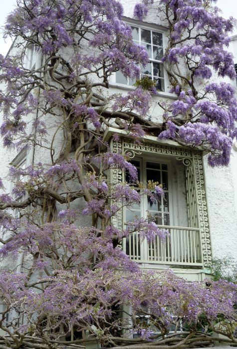 I would love a house covered in vines...especially purple ones!