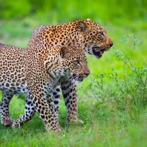 South Luangwa Safari with NCS