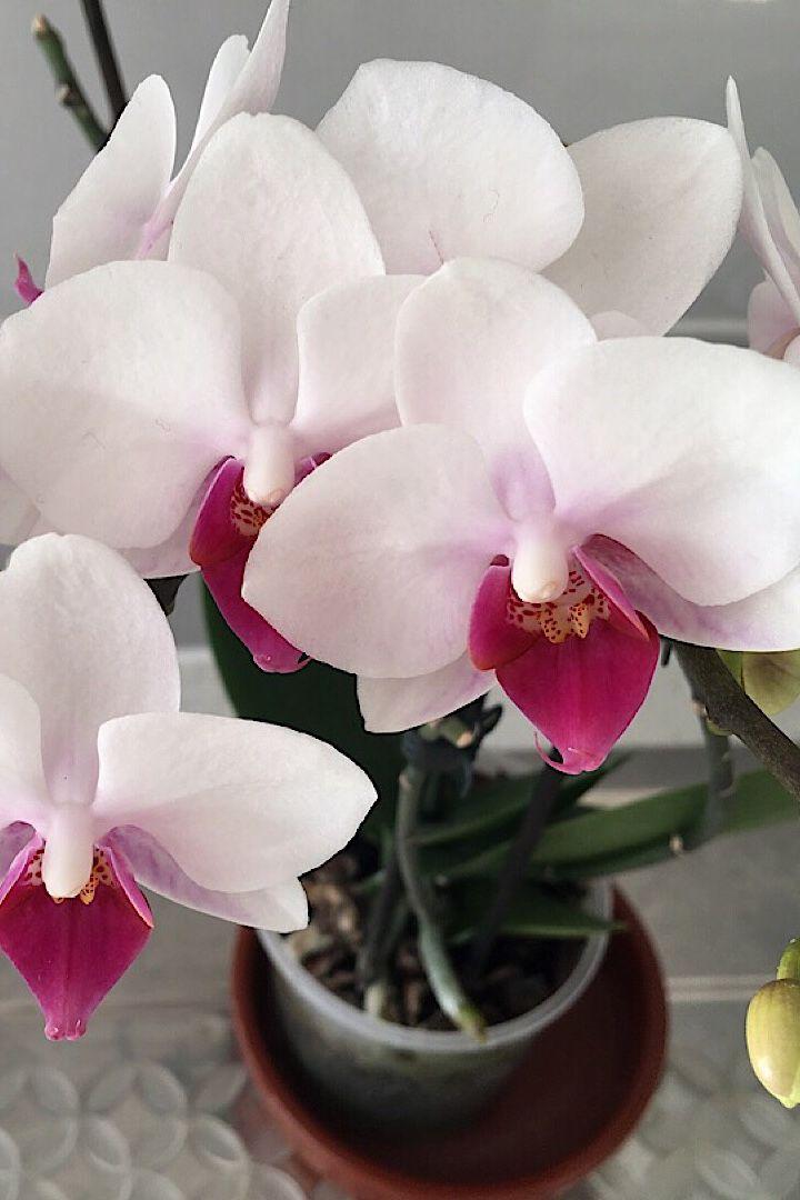 Orchids Plants Orchids Pretty Flowers
