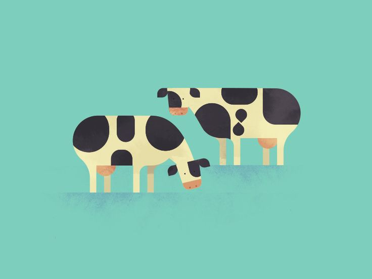 Cows by Sam Glynn