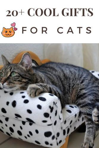 Gifts For Cats Cool That Will You Their Favorite Person The Rest Of Year Giftguide Giftsforcats