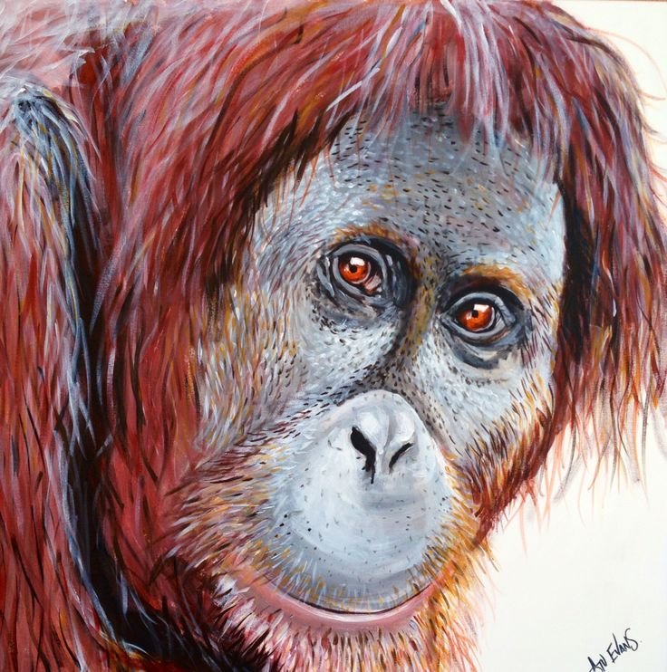 How about adopting a Ranga today, or this weekend? Oliver is looking for a new home! Message me for details, and share with friends. He's 91cm x 91cm acrylic on canvas.