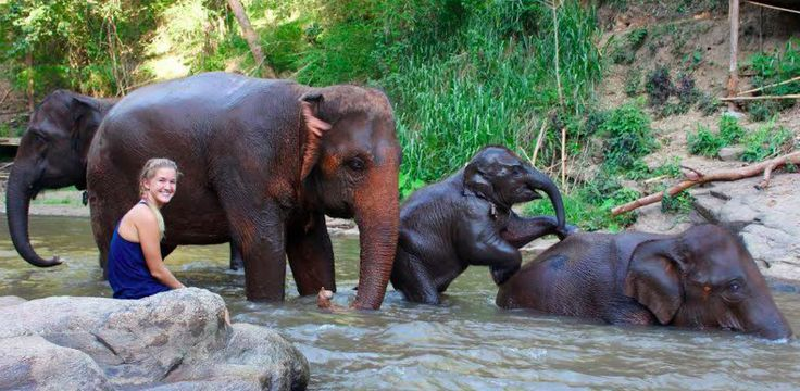 Through Workaway, you can volunteer to rescue elephants at an eco-lodge in Thailand.