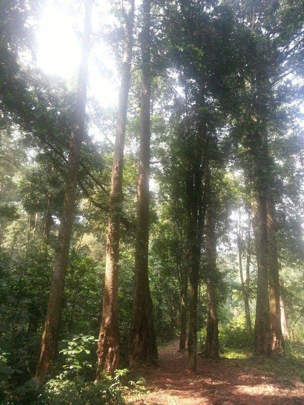 Calobak Forest
