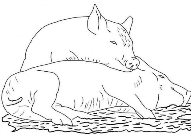 les 49 meilleures images du tableau coloriages animaux domestiques