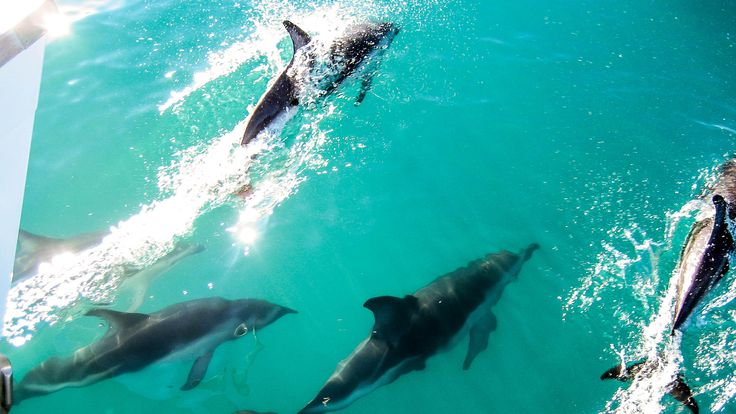 Itinerary (13-days): New Zealand, South Island .. Looking to get out of the grind for a couple of weeks? Get your flow back in this scenic adrenaline central. Get your (wet)suit on with wild beautiful dolphins.